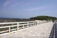 青島 弥生橋