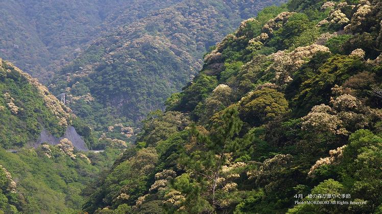 4月 綾の森が華やぐ季節