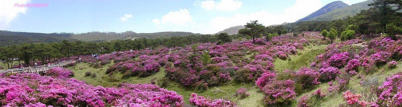えびの高原 つつじヶ丘みやまきりしまパノラマ写真
