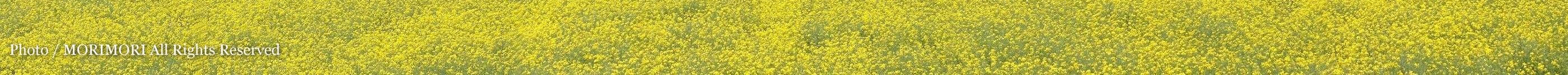 西都原古墳群の桜と菜の花 04